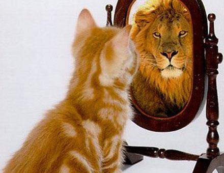 gato olha espelho vê leão
